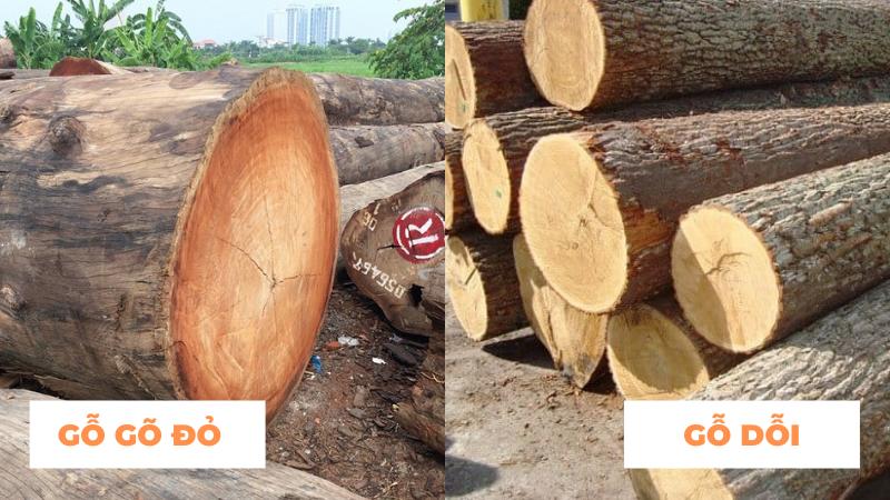 So sánh gỗ gõ đỏ và gỗ dổi – Đặc điểm và ứng dụng